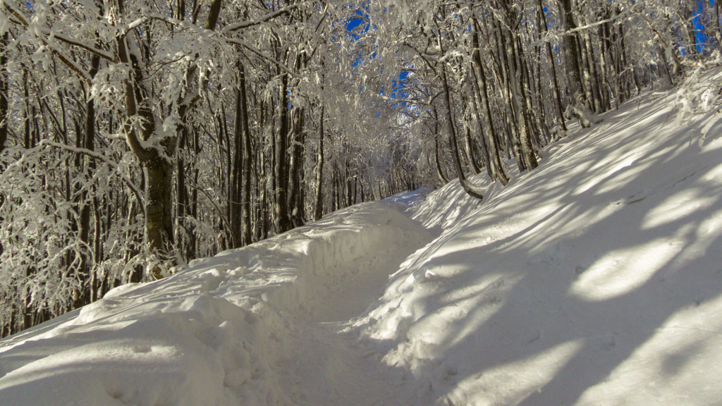 Ścieżka prowadząca przez las wygląda po prostu pięknie.