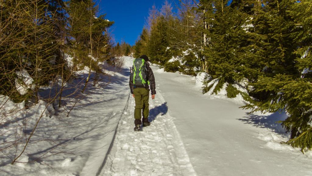 Ścieżka prowadzi przez piękny o tej porze roku las.