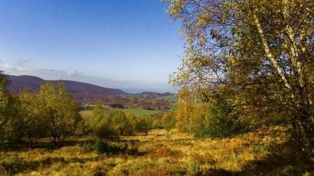 Bieszczadzkie lasy jesienią są po prostu piękne