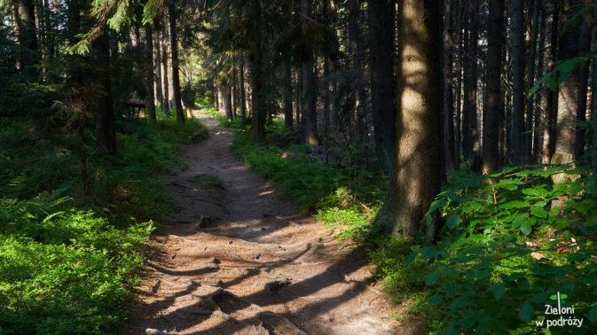 Droga przez długi czas prowadzi lasem, ale nie łagodzi to skutków upału