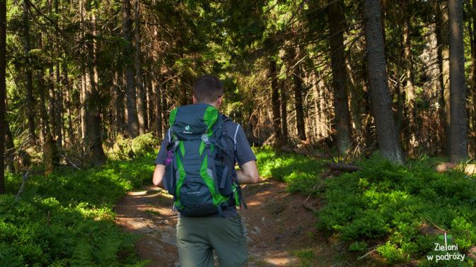 I znów odcinek prowadzący lasem