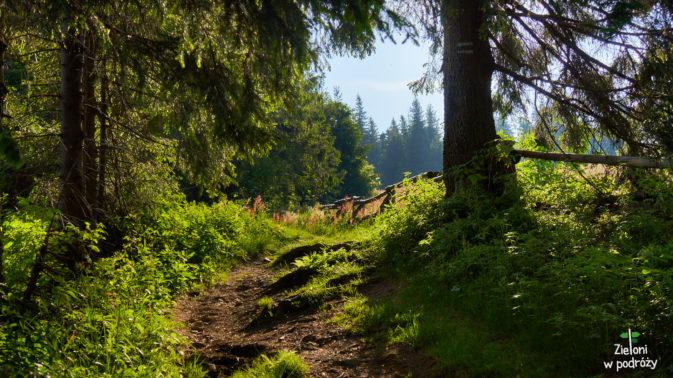Poranek w lesie. W drodze na Turbacz
