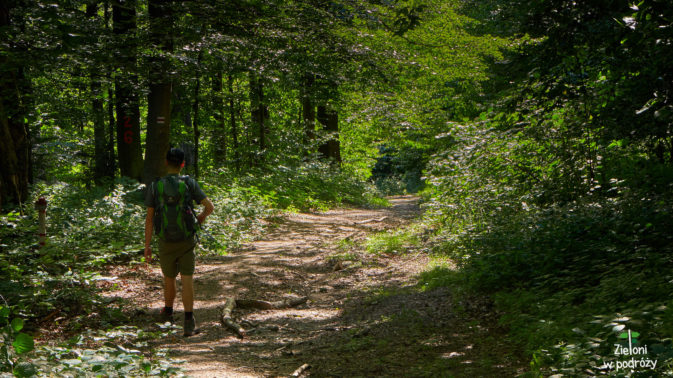 Jeszcze ostatni fragment przez las i nasza krótka wizyta na Lackowej zostanie zakończona.