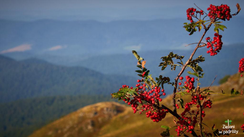 Połoniny nabierają coraz intensywniejszych barw. Im bliżej jesieni tym będzie jeszcze ciekawiej.