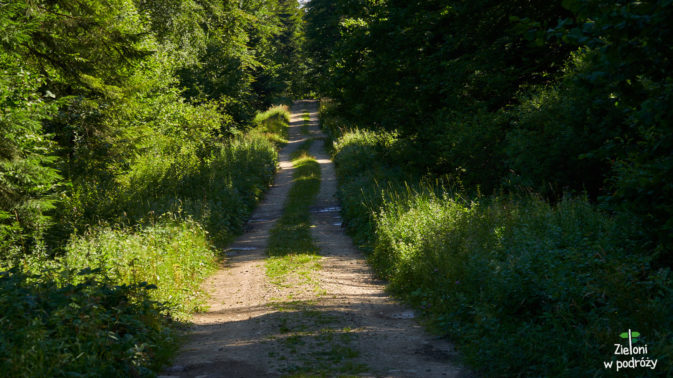 Ruszamy na szlak. Po początkowym fragmencie wśród pól i łąk wkraczamy do lasu