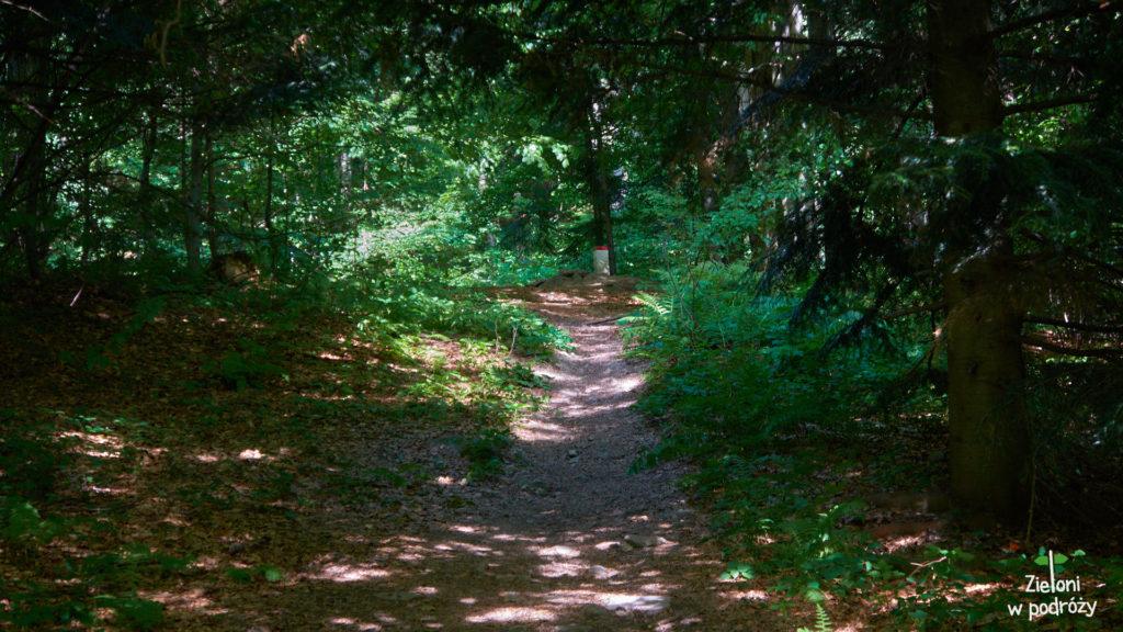 W lesie jest całkiem przyjemnie. Cicho i w miarę chłodno.