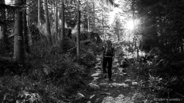 Poranek w lesie. W stronę Czerownych Wierchów