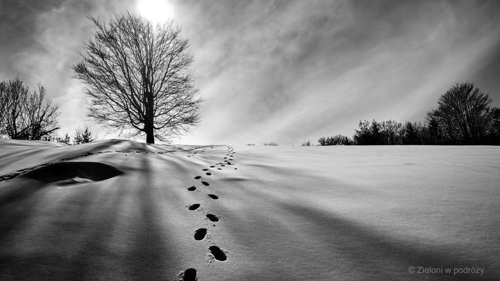 W Pieninach zima w pełni. Po polskiej stronie wciąż gruba warstwa śniegu. Istne dwa światy.