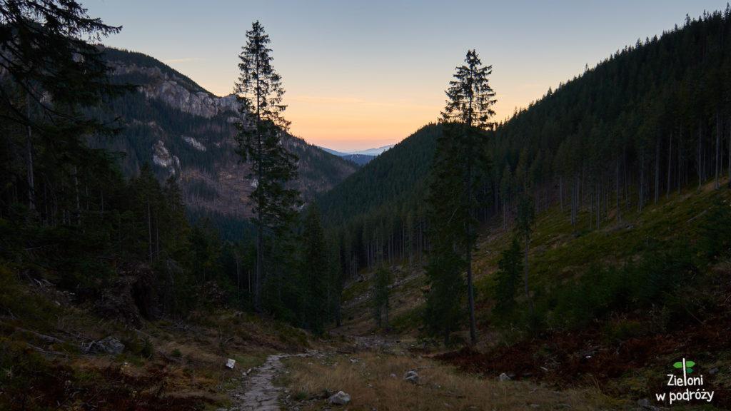 Fragment prowadzący zniszcoznym lasem