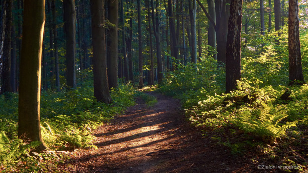 Lasy da się przemierzać na piechotę ale i rowerem.