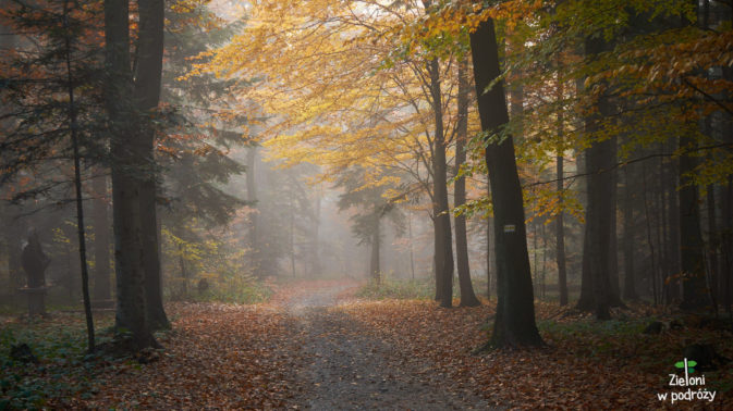 Nastrojowy las skryty we mgle