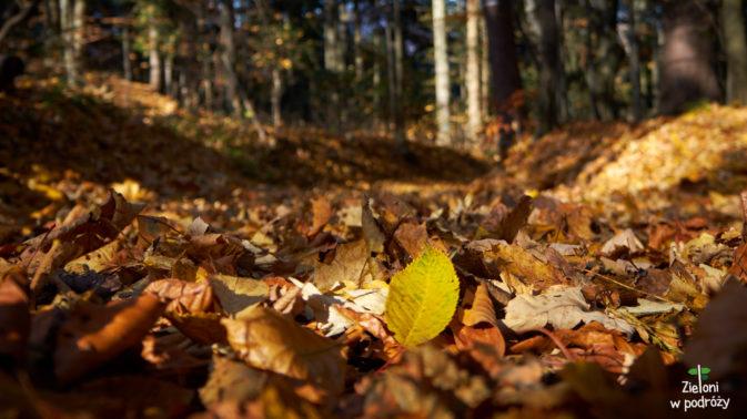 Wkrtóce drzewa zgubią już liście, a to oznacza jedno - białe szaleństwo coaz bliżej.