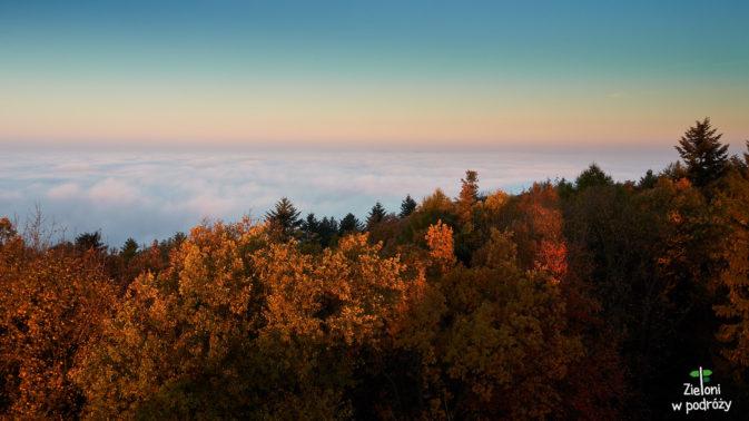 Z każdej strony las i morze mgieł