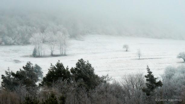 Drzewa w tej mgle wyglądają naprawdę niepokojąco
