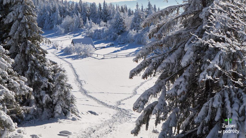 Lubań zimą wyglądał bajkowo