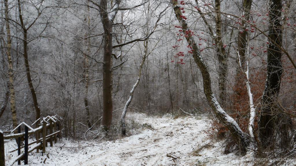 Od tego momentu na Baranie będziemy zmierzać już tylko lasem