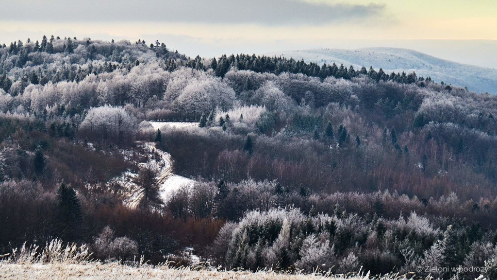 Widać naszą ścieżkę prowadzącą wśród białych drzew.