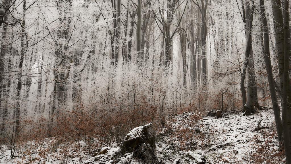 Zima potrafi zadbać o piękne otoczenie