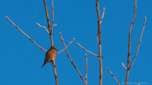 Tego ptaszka widzę chyba po raz pierwszy