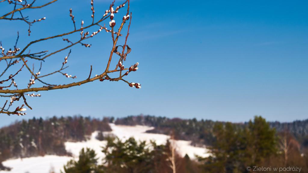 Wiosna coraz odważniej wkracza na te tereny