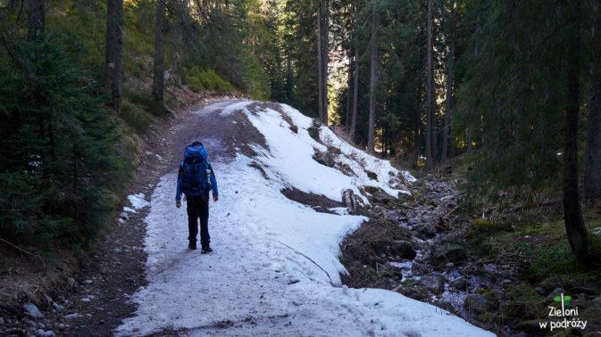 Jeszcze tylko dłużący się odcinek po lesie i znów będziemy wśród krokusów.