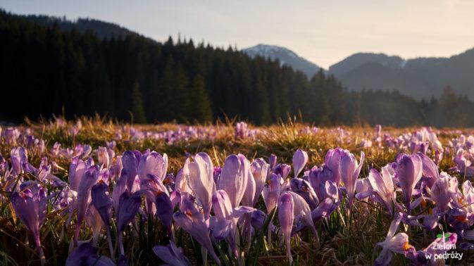 Wiosna, ach to ty
