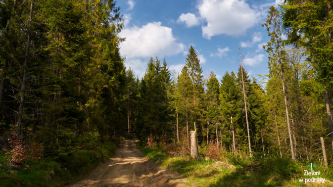 Popołudniem słońce jest już łagodniejsze, a spacer lasem relaksujący
