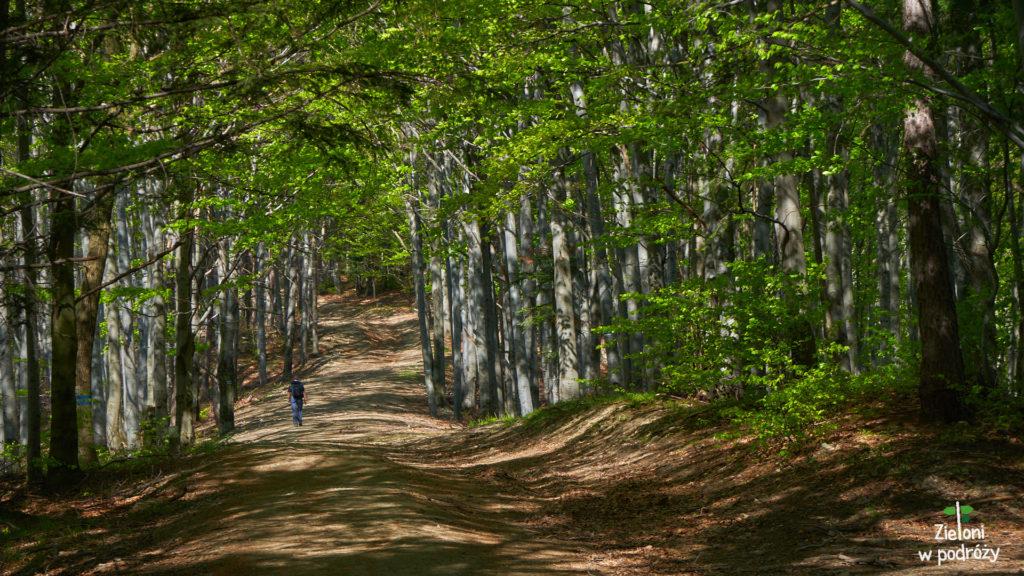 Szlak chociaż stromy, to miewa łagodniejsze fragmenty