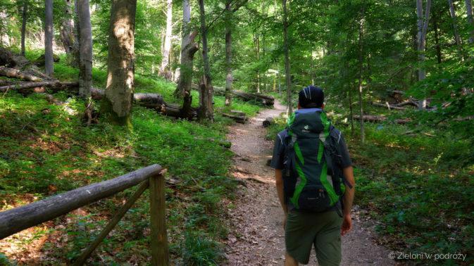 Standardowy etap przez las. Jest już naprawdę gorąco