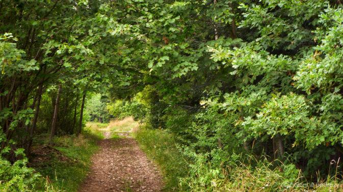 Ścieżka na nowo wkracza w las