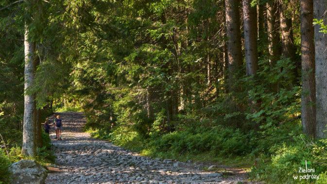 Przyjemny spacer przez las
