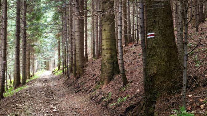 Leśna ścieżka towarzyszyła mi prawie cały dzień