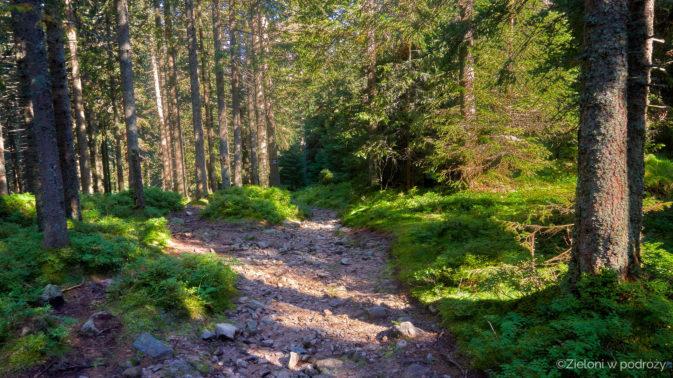 Nieliczne ładniejsze momenty w lesie