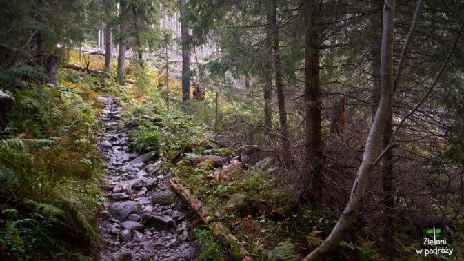 Takim lasem, po mokrych kamieniach schodzimy niżej