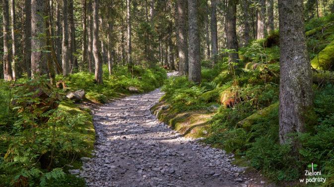 W lesie ciągle jeszcze dominuje zielony