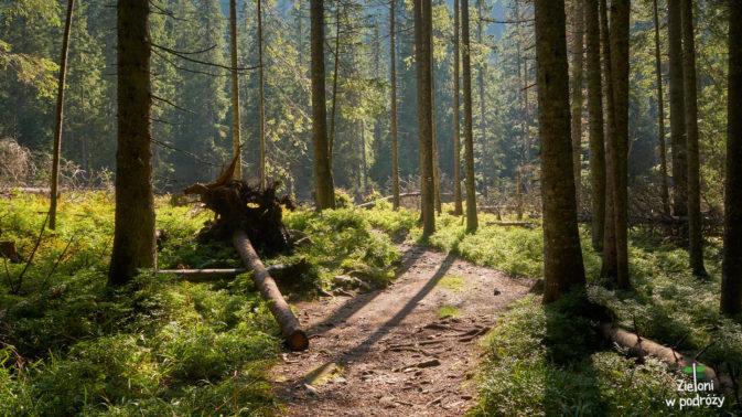 W lesie wreszcie trochę chłodniej