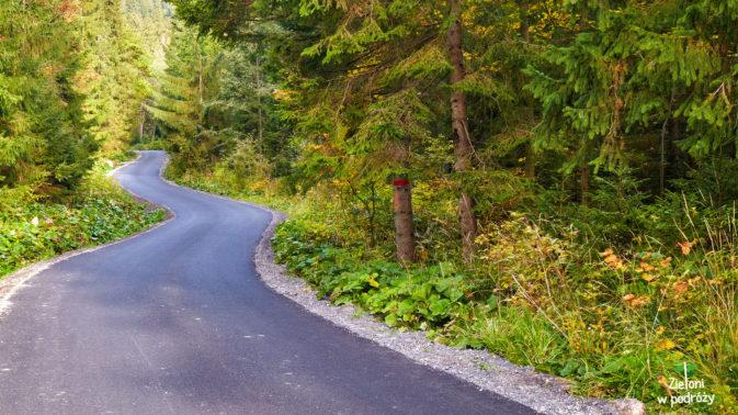 Początek to asfaltowy odcinek, ale kolorowe drzewa umilają marsz