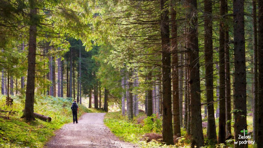Ponownie wchodzimy w las