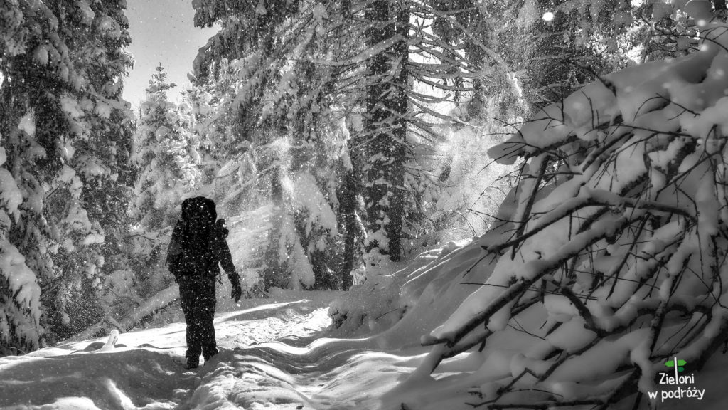 Prawdziwą zimę znaleźliśmy w Gorcach