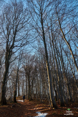 Drzewa niestety już bez liści, co trochę nas smuciło