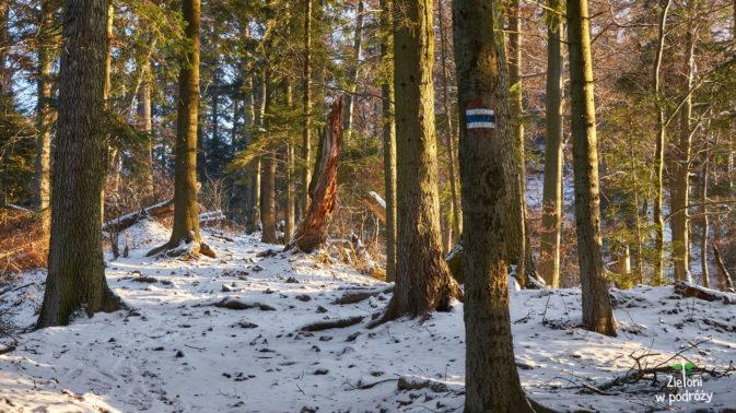 Na Przełęczy Sosnów kończy się zielony szlak i wybieram niebieski na szczyt Sokolicy