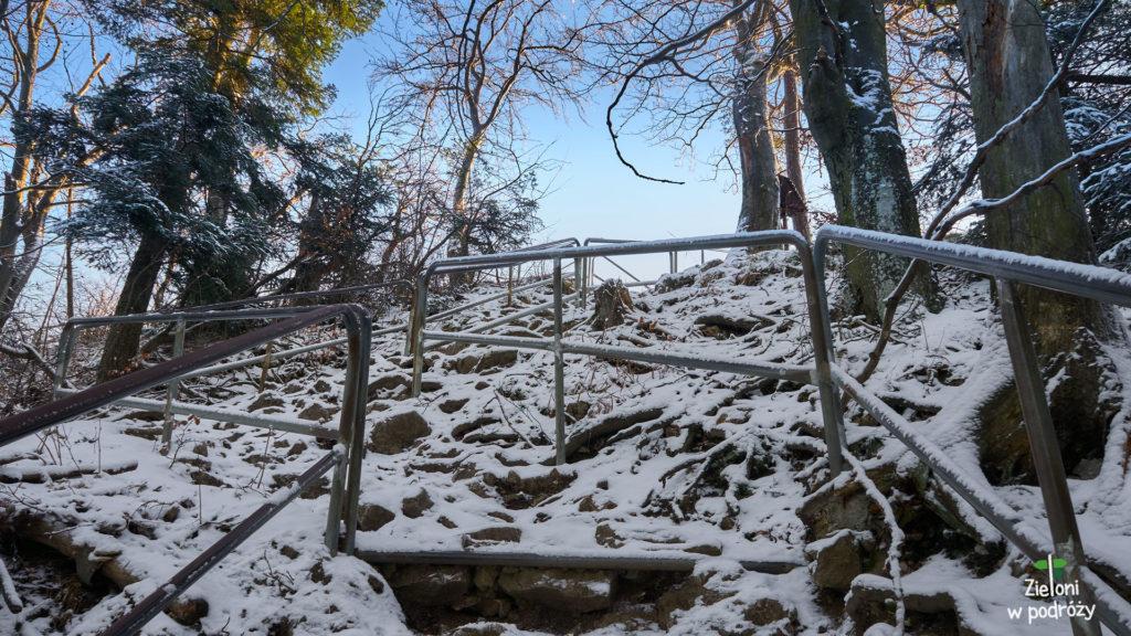 Sokolica zimą już na wyciągnięcie ręki