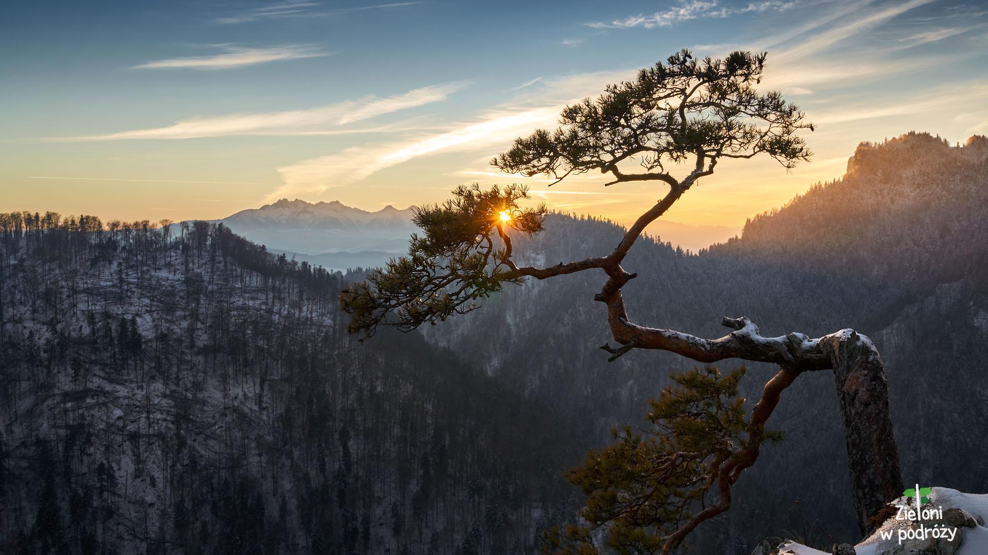 Sosna na Sokolicy i zachód słońca. Miły widok na koniec tej krótkiej wycieczki