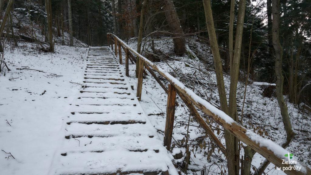 Wchodzę do lasu i nie mam najmniejszych kłopotów z podążaniem wzdłuż szlaku