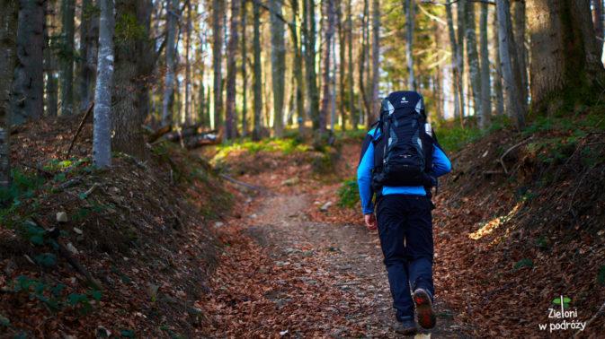 Wkraczamy do lasu, a ja zaczynam testować nowy obiektyw