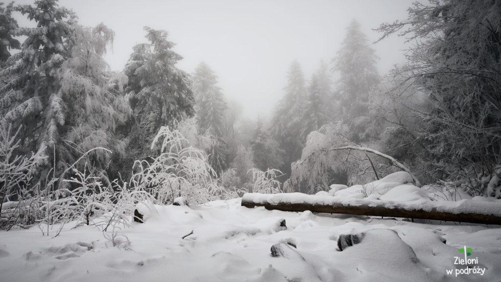 Łysica zimą. Najniższy szczyt Korony Gór Polski.