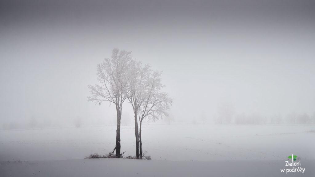 Żegnam Góry Świętokrzyskie takim ciekawym pejzażem. Było całkiem fajnie