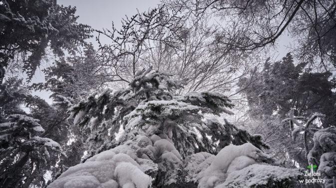 Drzewa aż po czubki pokryte śniegiem