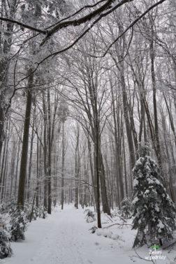 Przyznajcie, że klimatycznie w tych Górach Świętokrzyskich