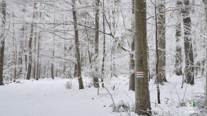 W lesie jest cicho i spokojnie